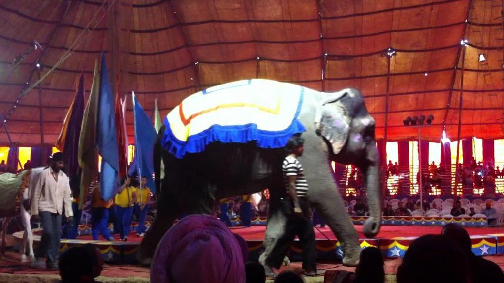 Gemini Circus Panchkula